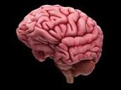 Blockage in the brain
