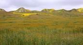 Temperate Grassland Description