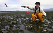 Pollution affects oyster reefs