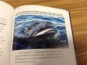 Baleen plate