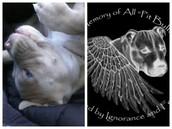 Bella and In Memory Of