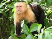 Spider Monkey Care and Details