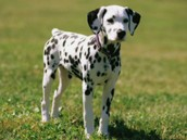 my dog name BOWEN