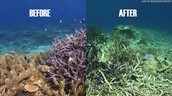 What dead coral reefs look like