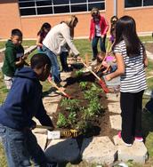 3rd Graders Plant A Salsa Garden