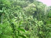 יער גשם בברזיל