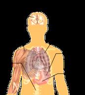 organs effected