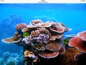 5% of coral can be found in the bahamas