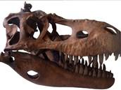 Albertosaurus Skull