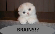 YOUR BRAINS!!!!!!!!!!!!!