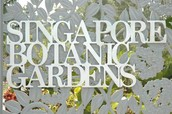 Singapore Bontanic garden