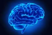 NEUROLOGY DISCIPLINE