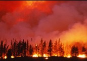 Forest fire/Wildfire