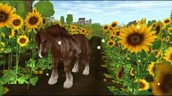 The Shire Horse Gallery