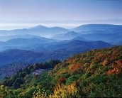 The forest of North Carolina