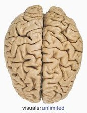 Learn about the Cerebrum
