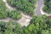 http://wwf.panda.org/about_our_earth/teacher_resources/best_place_species/current_top_10/amazon_rainforest.cfm