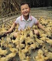 Providing Animals