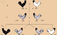 Mendel chart