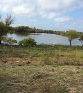 Pond/ Marsh/ Fresh Water