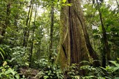 למה חשוב לשמר את יערות הגשם?