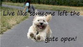 """LIVE LIFE LIKE SOMEONE LEFT THE GATE OPEN"""