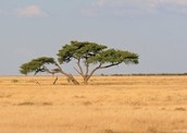 Activites To Do In The Savannah