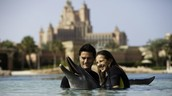 Dolphin Bay In-Water Experiences & Aquaventure Waterpark Admission