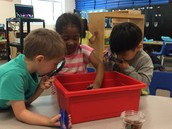 What can we find in the soil?