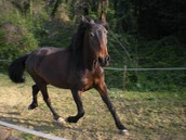 Corso di equitazione base