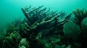 whats killing off are coral reefs
