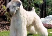 A Beautiful Dog!