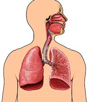 Healthy Lungs and Mouth