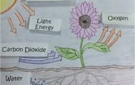 A Drawing of Photosynthesis
