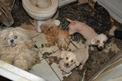 9. It's been estimated that there are 900 to 2,000 new cases every year of animal hoarding in the US, with 250,000 animals falling victim.