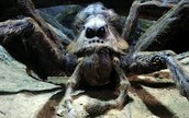 Aragog from Harry Potter