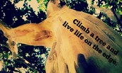 Live life in a tree