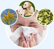Mis põhjustab allergia?
