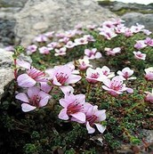 Plants that live in the Tundra