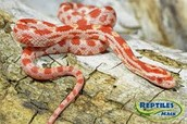 Slither!