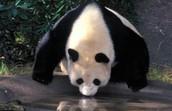 Pandas Extra Time
