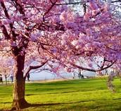 Mi estación favorita es la primavera, porque no hace mucho calor y no hace mucho frío, celebrar mi cumpleaños y me gustan flores.