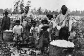Georgia's  Slaves