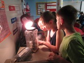 Observing our chirping crickets