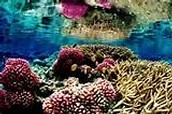 A Coral Reef in the DR