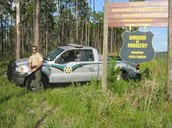 Typically an FWC Officer works in the forest or swamps
