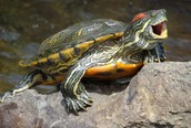 The Basic Information of the Turtle