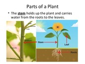 1.) How does water enter a plant and get to the leaves?
