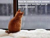 Voor de wereld ben jij zomaar iemand, voor jouw dier ben jij zijn hele wereld!