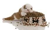Yums Pups